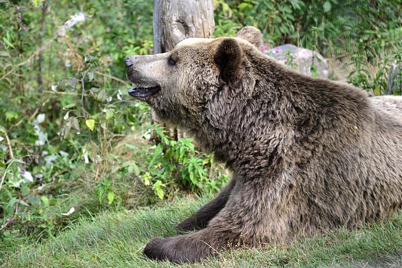 Im Alternativen Wolf- und Bärenpark - Schapbach