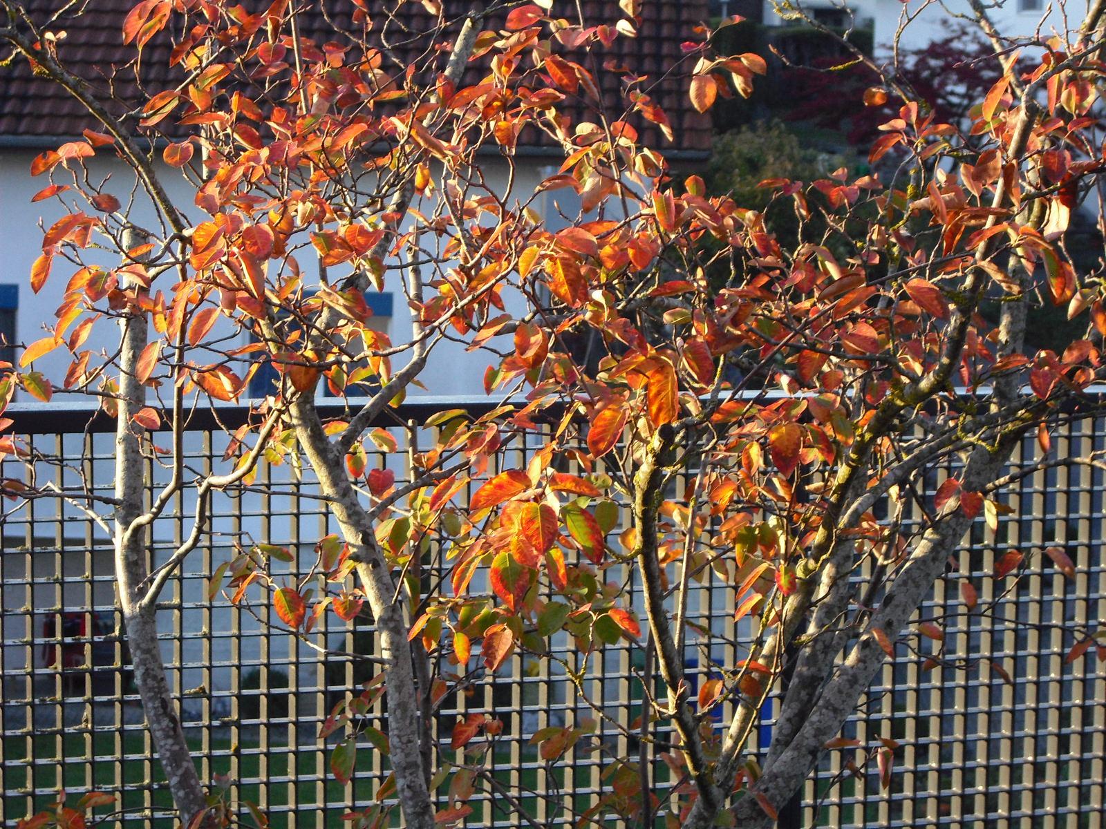 Herbst Terrasse-1