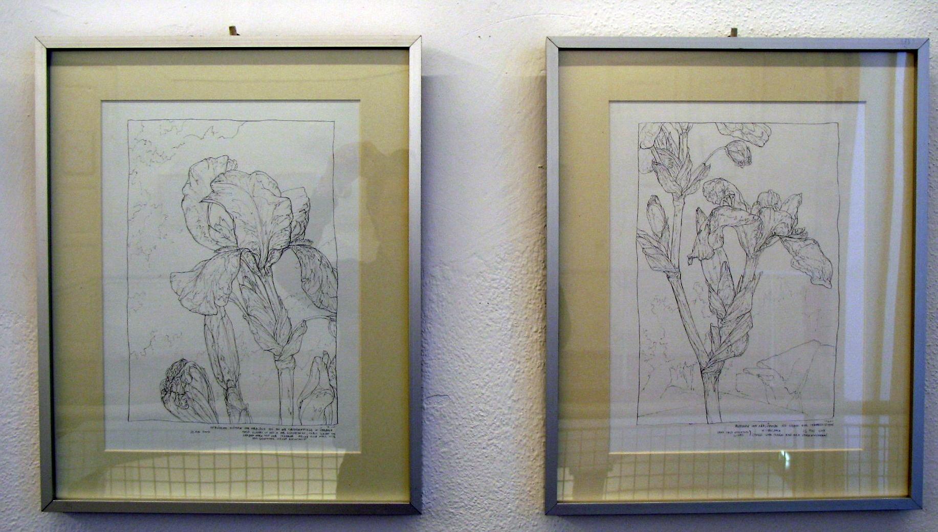 Schwertlilien (Ausstellungsansicht 2007)