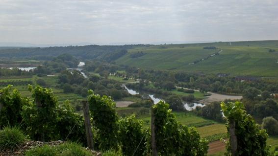 Blick von den Weinbergen um die Vogelsburg auf die Mainschleife/Altmain.
