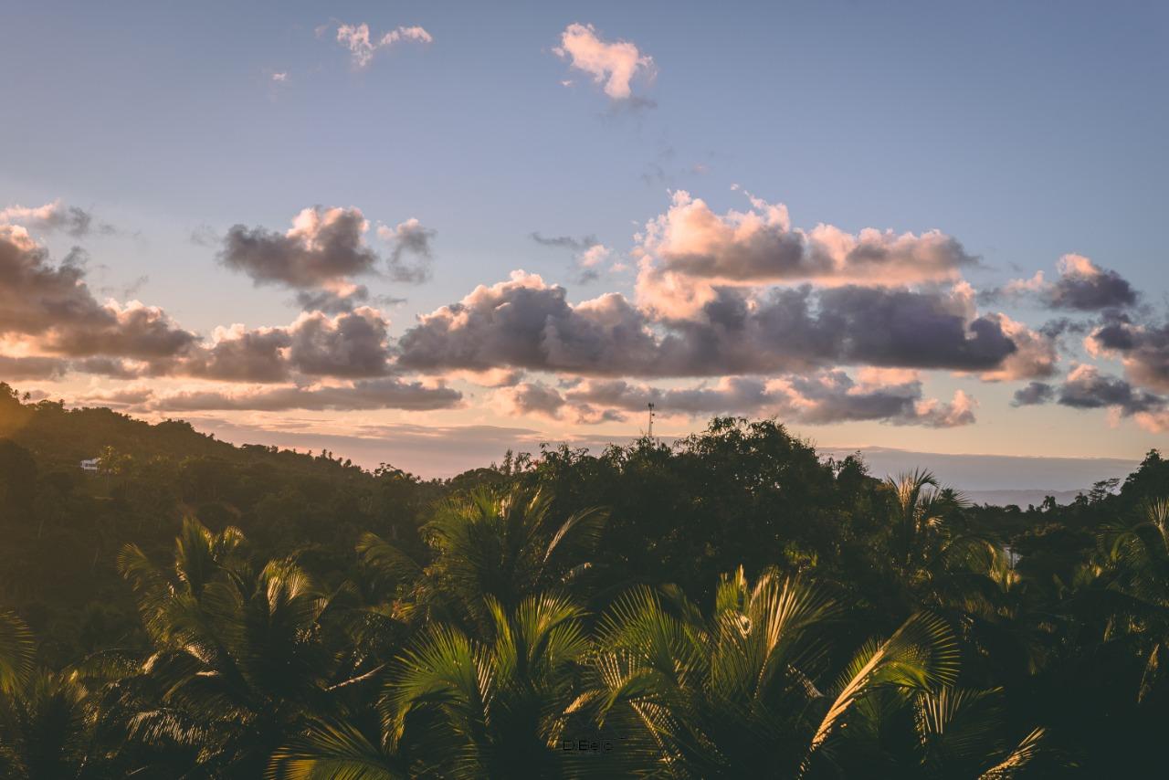 Palmenhaine von Samaná