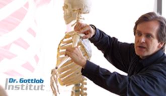 Schultergürtel Lehrgang Dr. Gottlob Institut
