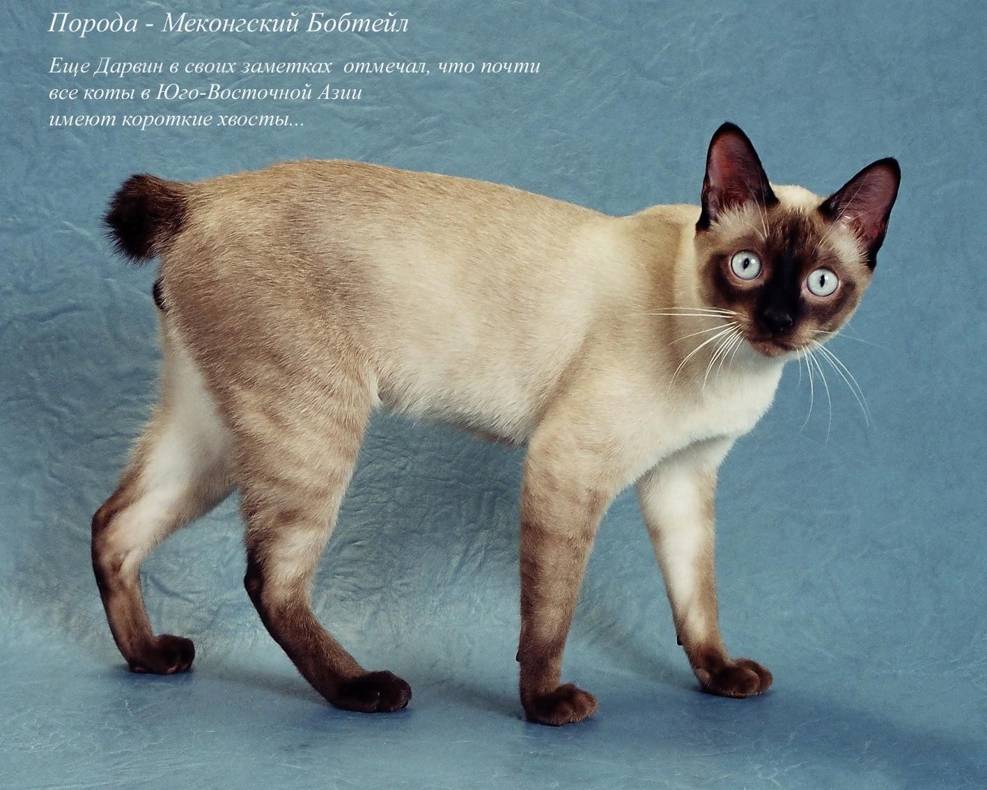 Картинки породы кошек фото с названиями пород