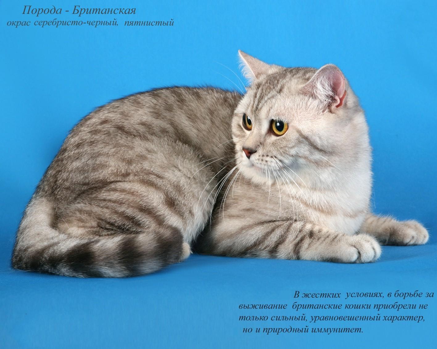 Картинки котов с надписью породы