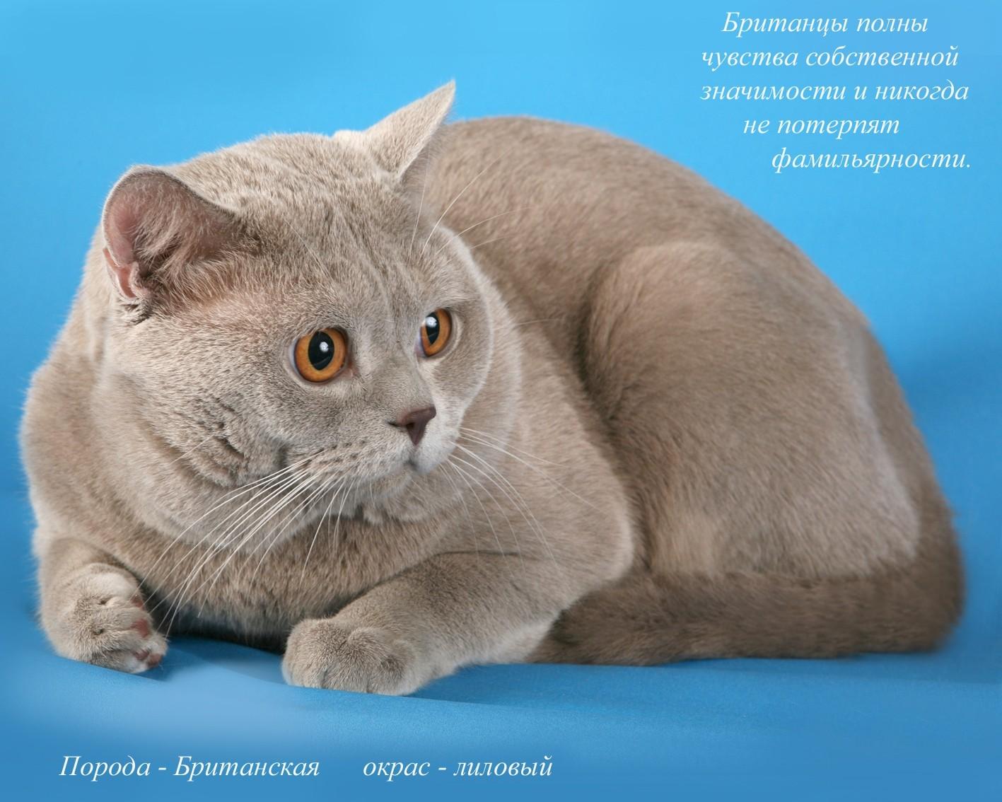Названия пород кошек и картинки