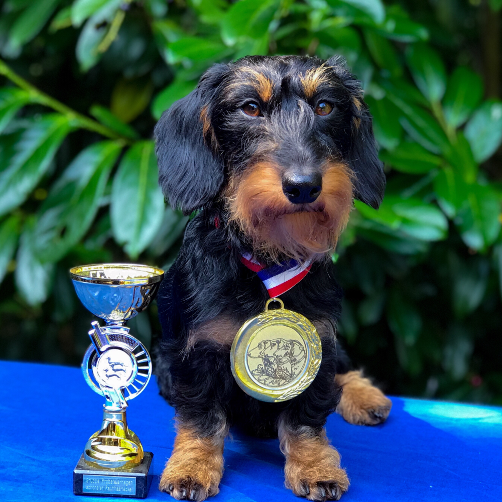 Schönster Hund aller Gebrauchshundeklassen - Spezialausstellung Panker 2019
