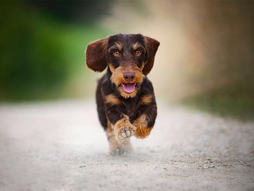 Hunter * Foto: Spoerle-Strohmenger * media-dogs.de