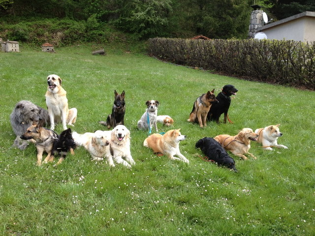 Et voici des chiens qui attendent le bon vouloir des photographes, mais surtout celle de chacun de leur maître