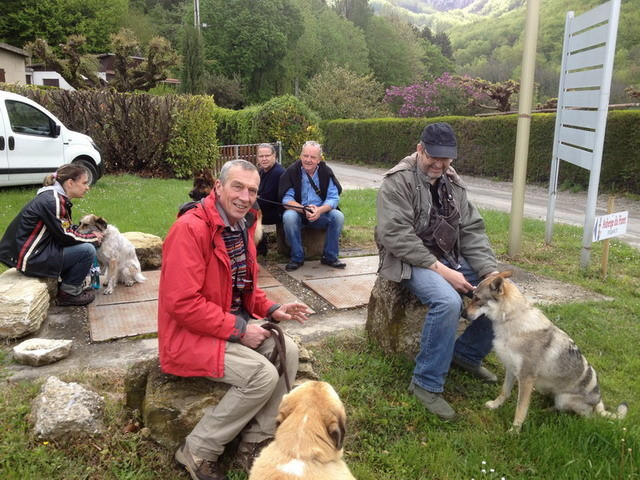 Les maîtres/chiens se regroupent avant de commencer la démonstration