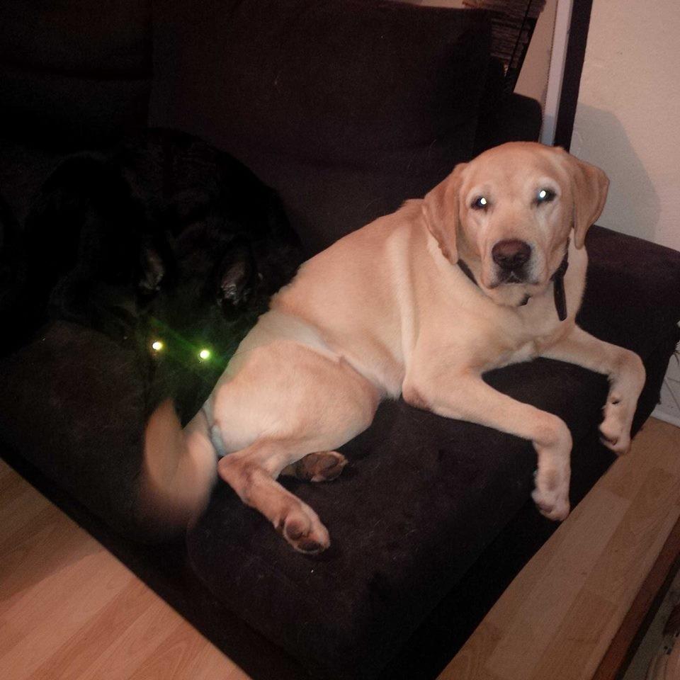 J'ai des lasers à la place des yeux....