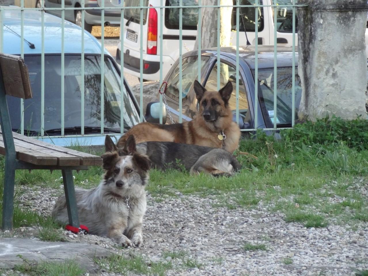 Les chiens attendent sagement