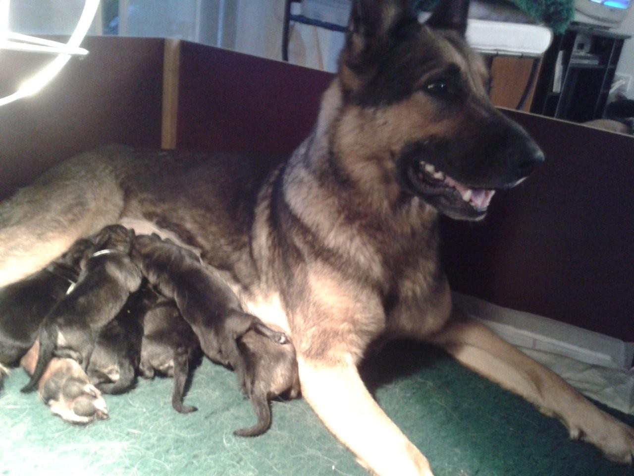 Ils sont nés hier, le 26 Septembre 2012