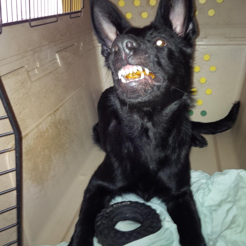 Souriez et comptez mes dents... car personne prendra mes jouets !!!