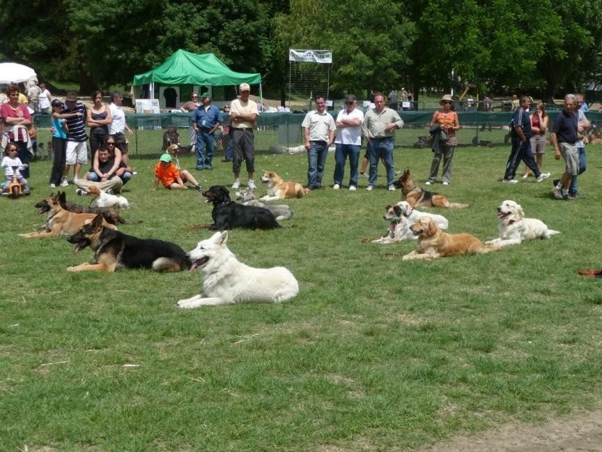 """Un ordre """"pas bouger"""" donné par chaque maître à son chien et les chiens attendent leur retour"""
