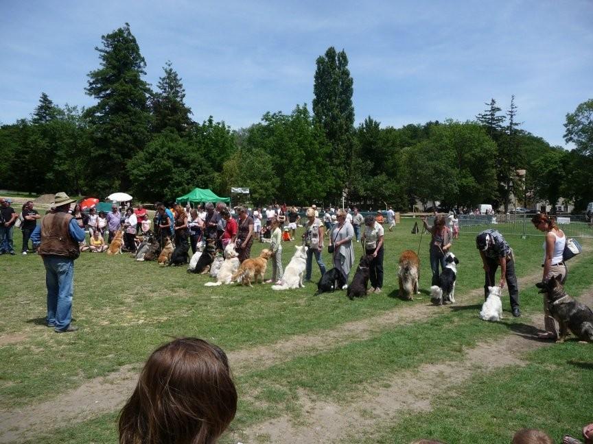 Les noirs et les gris ne sont pas forcément visibles, mais il y a 17 chiens alignés face à leur maître...
