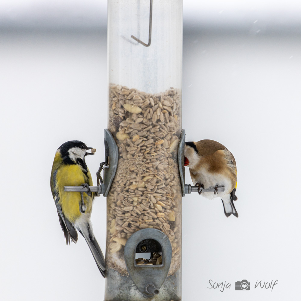 Winterfütterung der Vögel