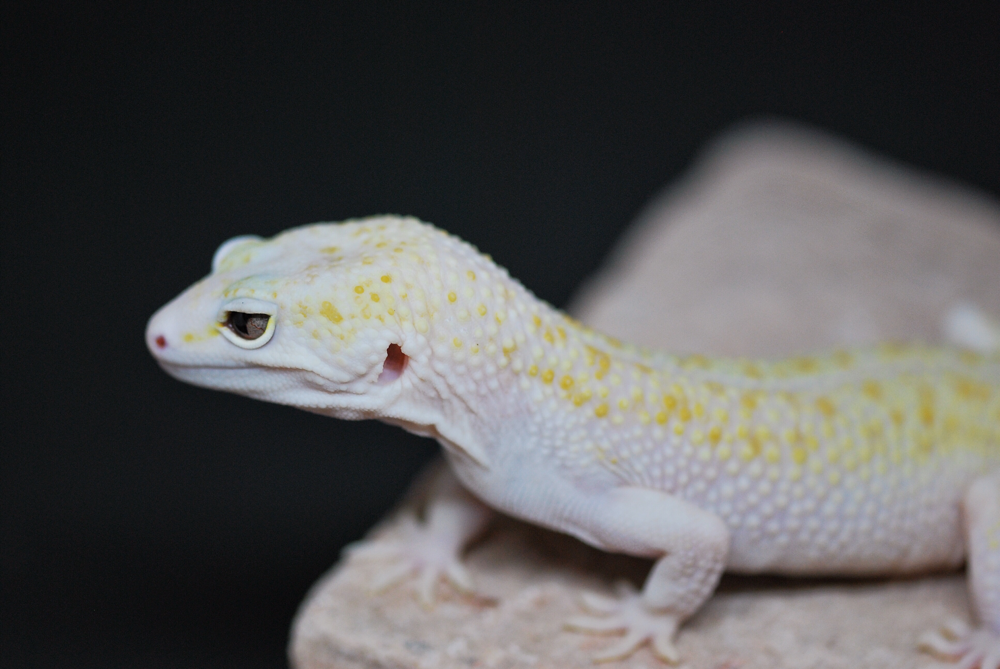 W&Y Mack Snow RAPTOR het Blizzard