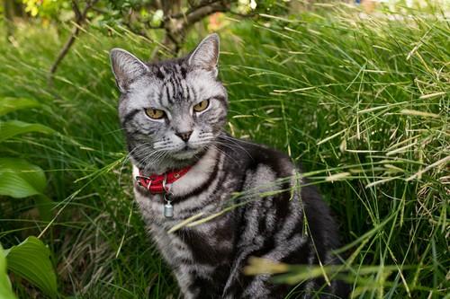 猫ミューの画像