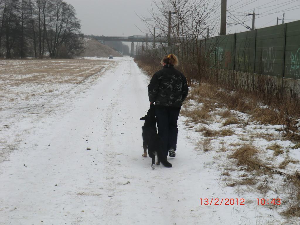 Futtertreiben - Anbahnung für das Fußlaufen -