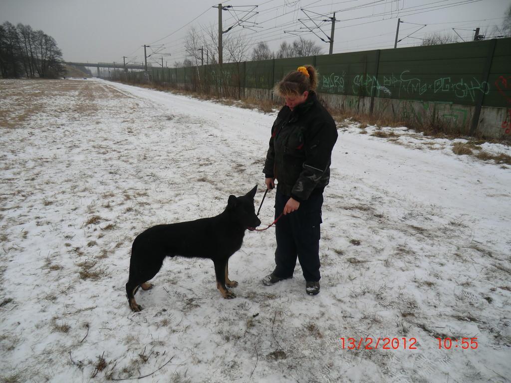 Ball zur Hundeführerin gebracht