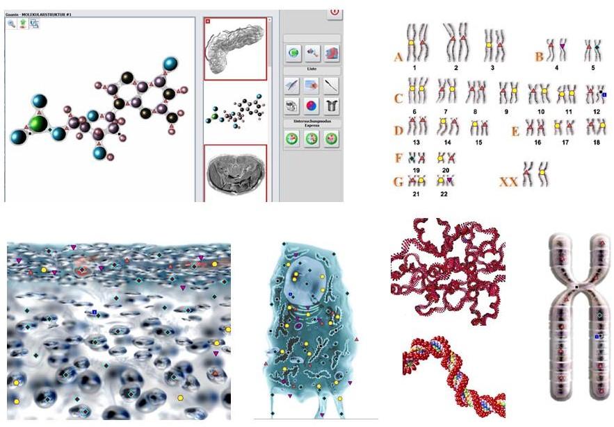 Body Scan Analyse, Heilpraktikerin Sylvia Silvia Domack,  Labor, Labordiagnostik, Laboranalyse, Bioresonanz, Body Scan Analys