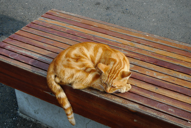 Ginger cat in Istanbul