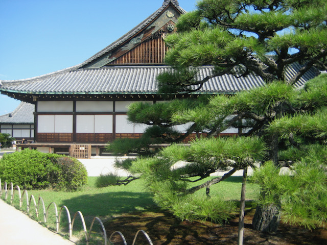 Black pine and shrine, Kyoto