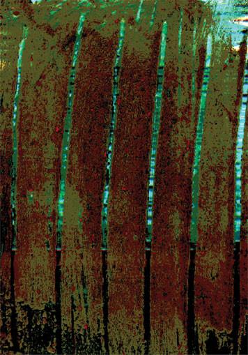 Bush Lake. 2003. Ink on paper. 42 x 29cm. © Charles Rocco