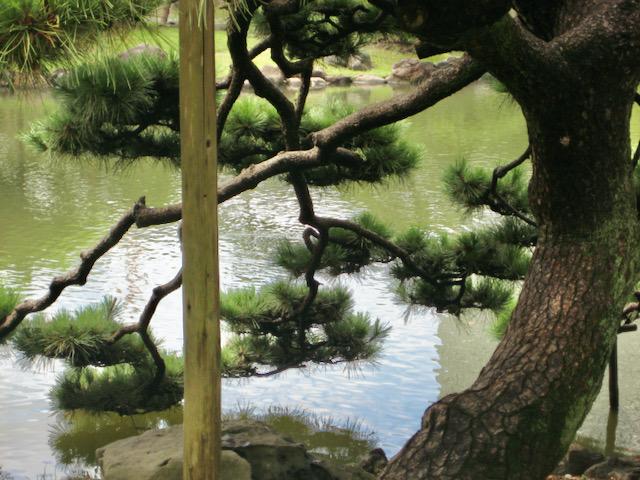 Ubiquitous tranquility, Tokyo
