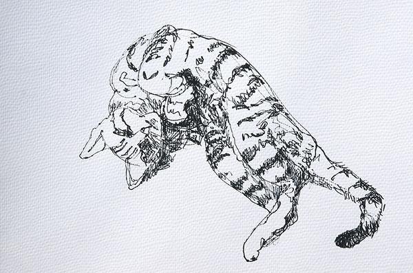 """""""Miro"""" Katzenstudie 3"""