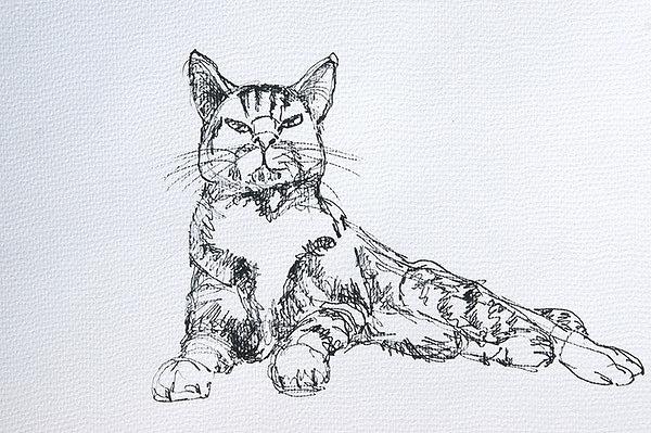 """""""Miro"""" Katzenstudie 1"""