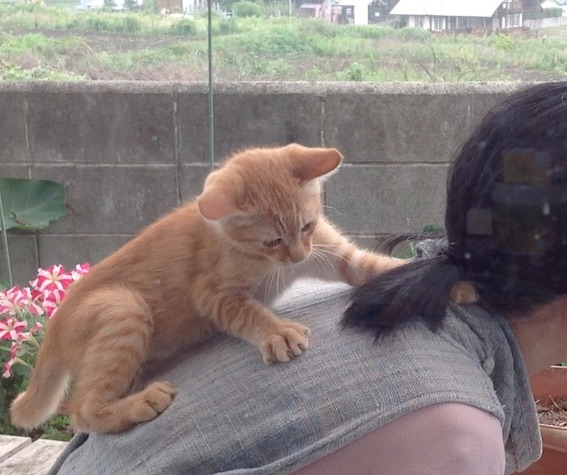 ゆるりとネコさん