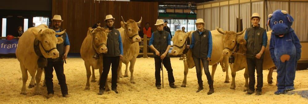 La race Villard-de-Lans est présente chaque année au Salon Agricole de Paris depuis 2010