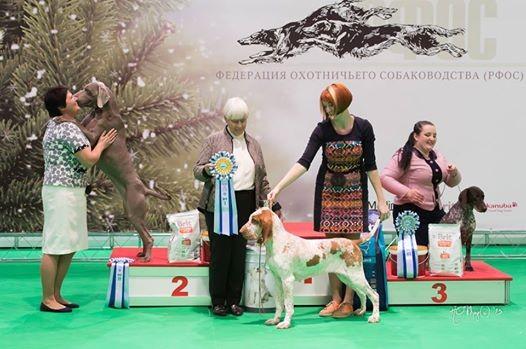 Одна из крупнейших охотничьих выставок собак им.Сабанеева -2015!!(более 1000 собак)