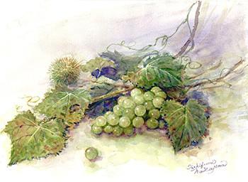 水彩画                               葡 萄