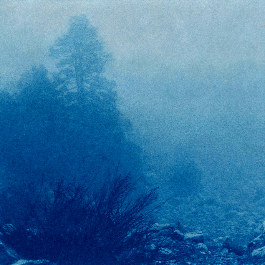 """""""Nebelbusch, Hellas"""", Cyanotypie aus der Serie """"Cyanotypien 1"""""""