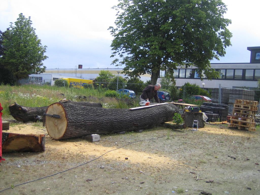 Baum wird Bank