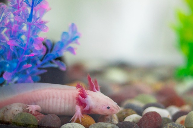 axolotl veterinario milano