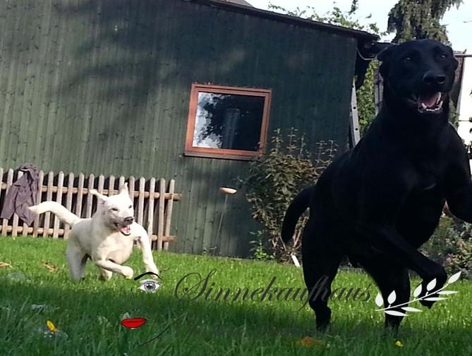 Jackys, Hundekuchen, Hundesnack, Leckerlie, Hund, Hundekeks,