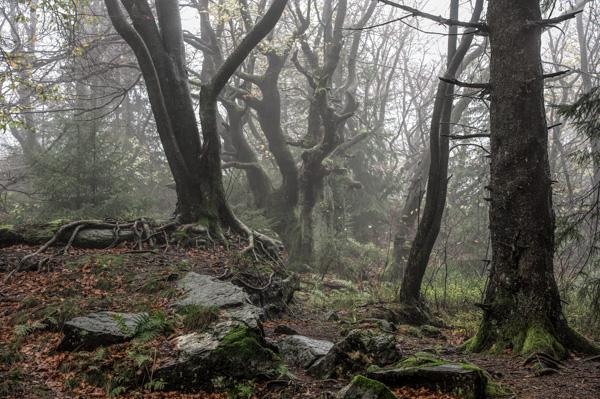Mystische Waldgeister
