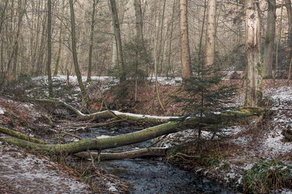 Sturm Friederike hinter lies auch seine Spuren