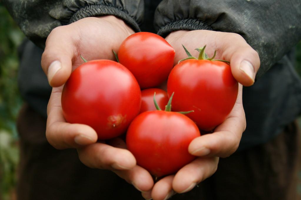 高糖度トマト