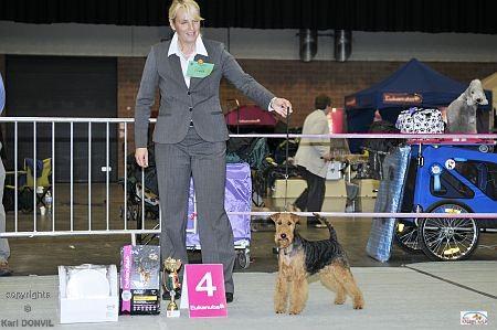 4. Platz Gruppe CACIB Leuven/Belgien 29.10.2011  (copyrights Karl Donvil)