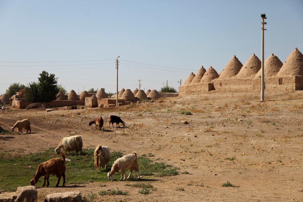 Harran, berühmt für seine Trulli-Häuser