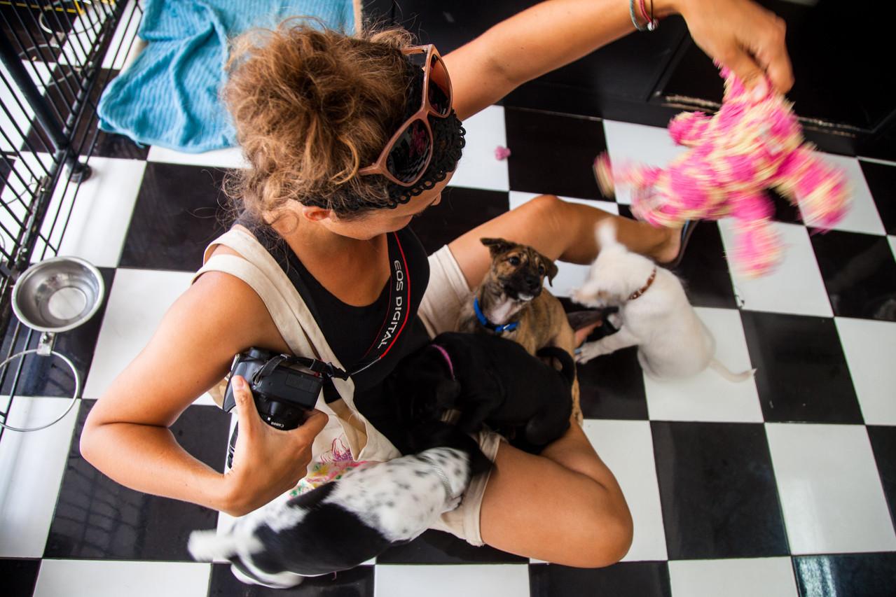 Auffangszentrum für Hundewelpen