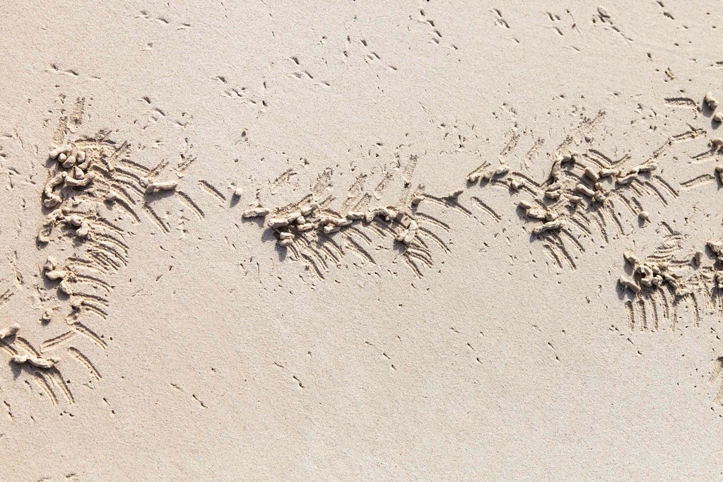 Krabbenkunst