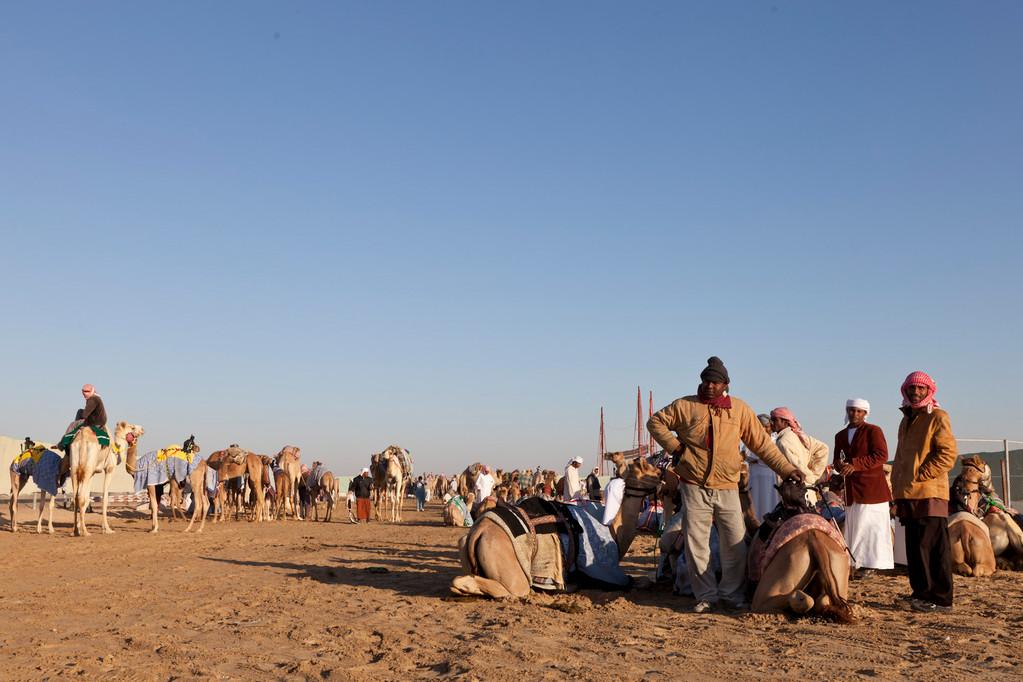 Vorbereitungen für's Kamelrennen