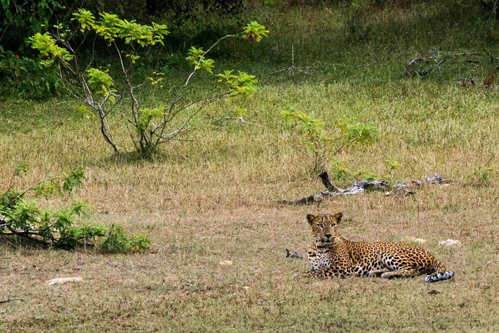 die Leopardenmutter...