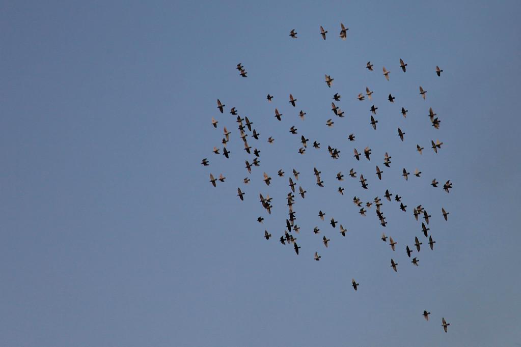 Formationsfliegen