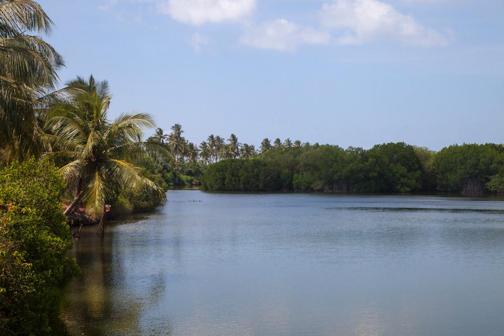 Mangrovenlagune